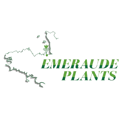Emeraude Plants